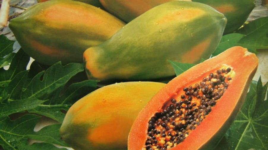 Papaya y sus propiedas