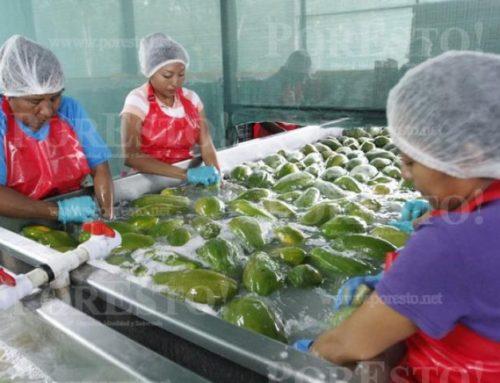 México: Gira por Asia para diversificar mercados agroalimentarios